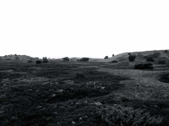 Simon Fuhrmann Anholts ørken